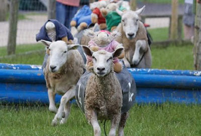 Hatton Adventure World Grand National Sheep Racing Attraction
