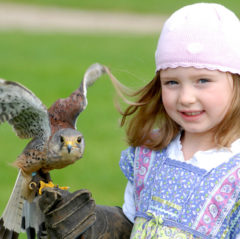 Girl With Falcon