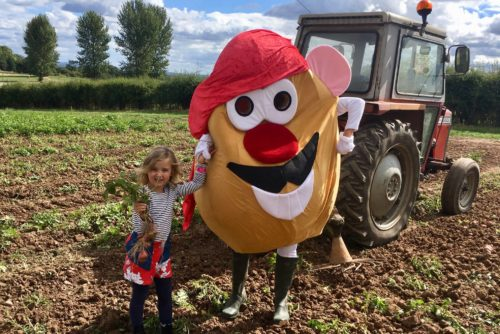 PYO Potatoes at Hatton Farm