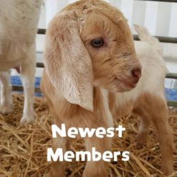 Newest Members - Goats