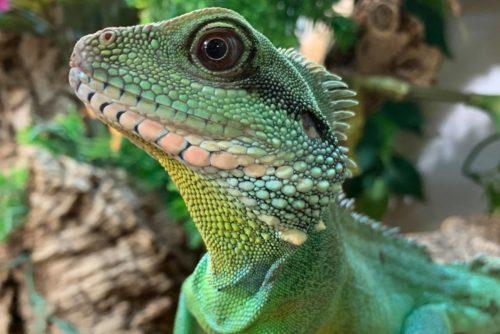 Hatton Adventure World Reptiles