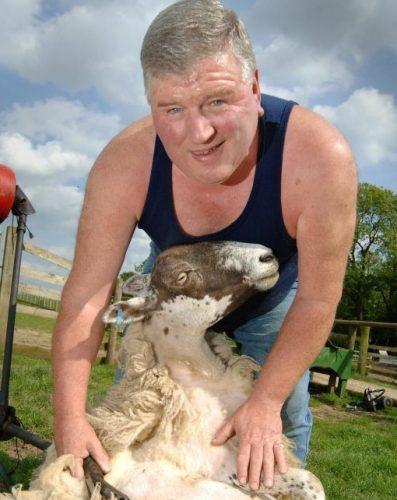Sheep Sheering