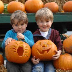 Hatton Adventure World PYO Pumpkins